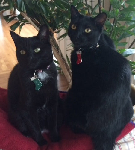 Dinah & Nala, kitty siblings, with their red and green holiday stocking tags