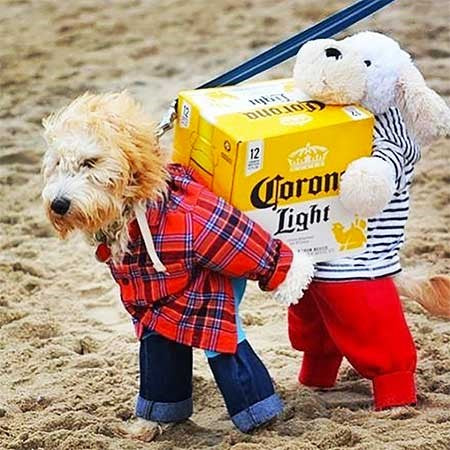 Pets In Hilarious Costumes