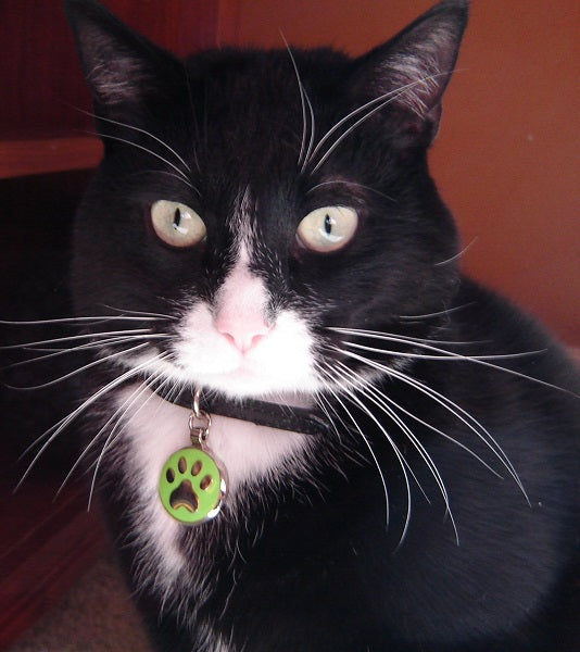Gary wearing a small lime Paw Jewelry Tag