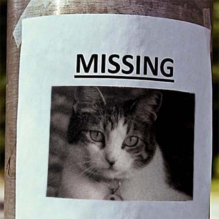 Missing Pet Poster