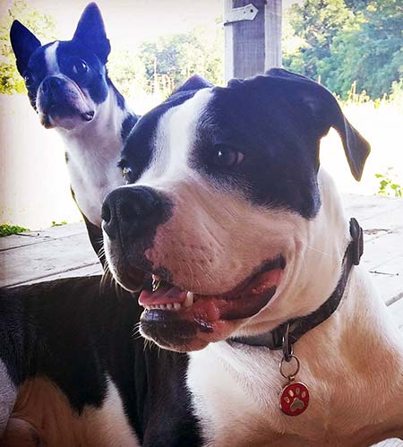 Two black and white dogs posing for the camera