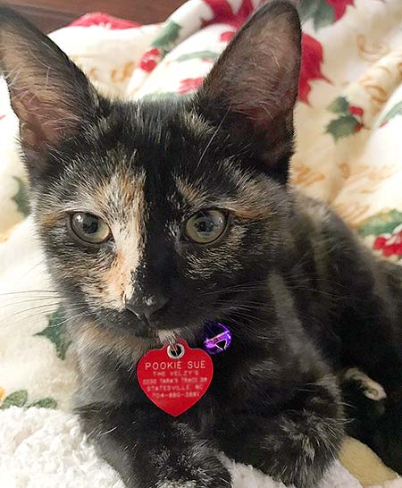 Cute calico kitten and her red heart tag