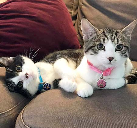 Two kittens being cute on a couch and wearing tiny jewelry cat tags