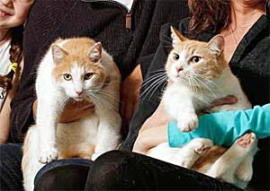 Two orange and white cats