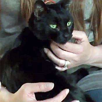 Black cat being held by its owner