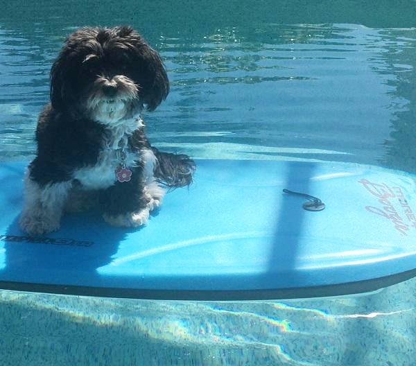 Sophie on the paddle board