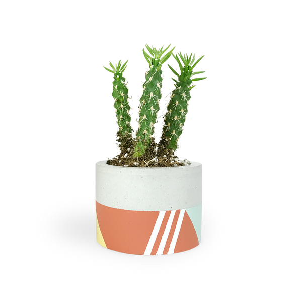 minimalist small tri color concrete planter with yellow, terra cotta and mint
