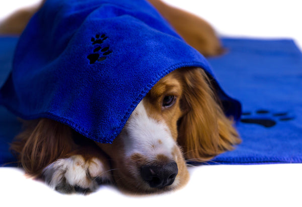 XL Premium Microfibre Pet Dog Towel Set - 150x80cm & 40x30cm : Super Absorbent - Quick Drying - Extra Soft