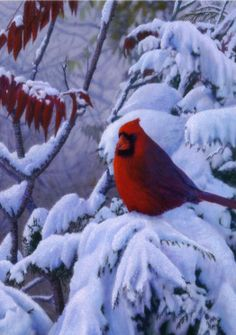 How To Turn Your Birdhouses Into Winter Shelters