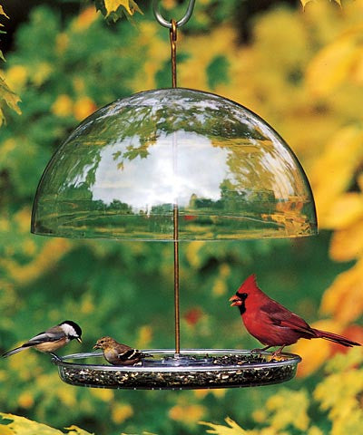 Dorothy's Cardinal Feeder by Droll Yankees