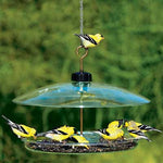Covered Platform Bird Feeder by Droll Yankee