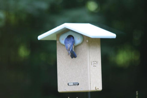 Bird House with Color Video Camera, Infrared Night Vision, Microphone