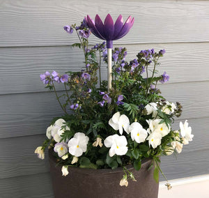 Jazmine Root Waterer in Violet used in a planter