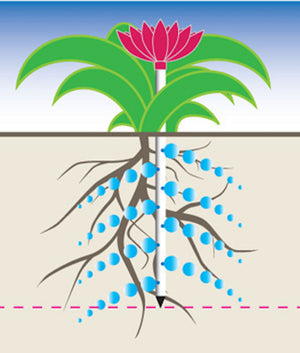 Diagram displaying how the deep root waterers are effective at irrigating hard to reach roots