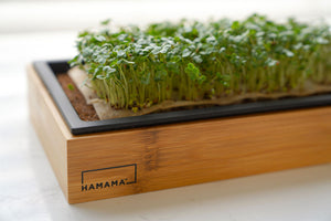 Microgreen seed quilt fully grown