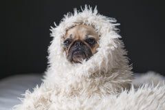 I'll be honest, I got a little depressed writing about winter in September. So I picked an image of a silly dog in a fluffy blanket to make myself feel better. Photo Credit: Matthew Henry