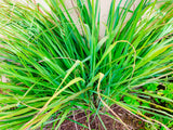 Fresh Lemongrass Leaves