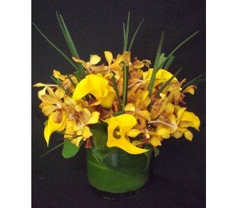 Orquideas y Yellow