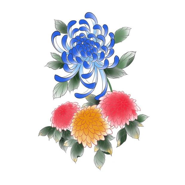 Color Chrysanthemum