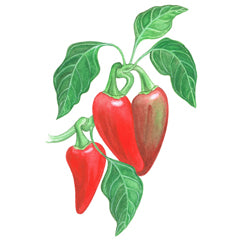Red Pepper