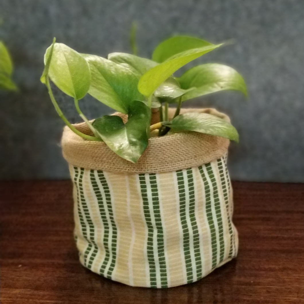 Chic Planter Wrap  (Daisy)