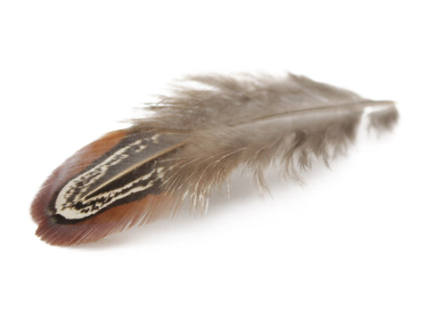Ringneck Pheasant Plumage Almond Feathers