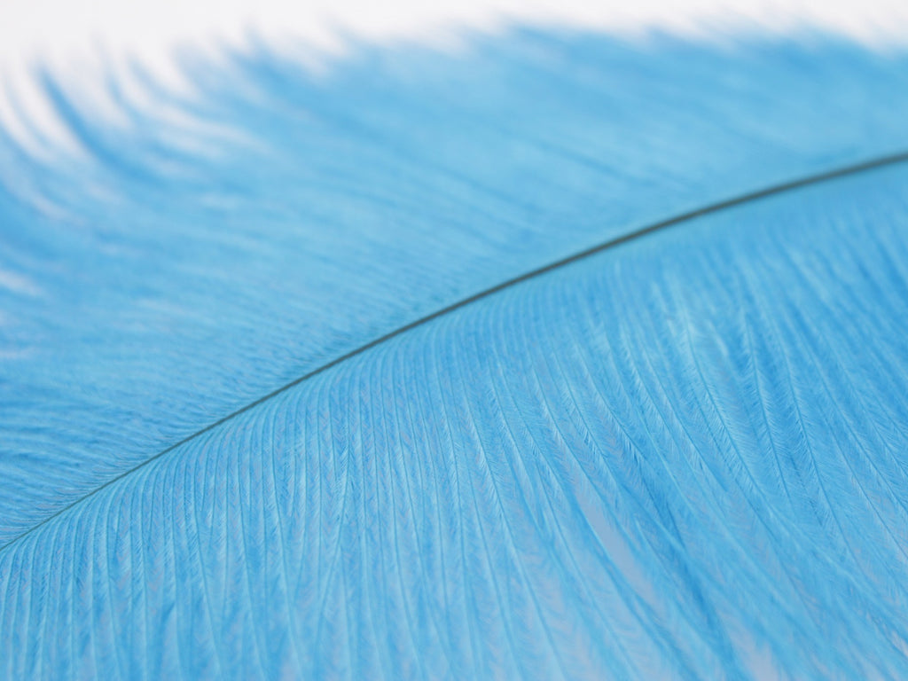 "Blue Ostrich Feathers Drabs (10-12"")"