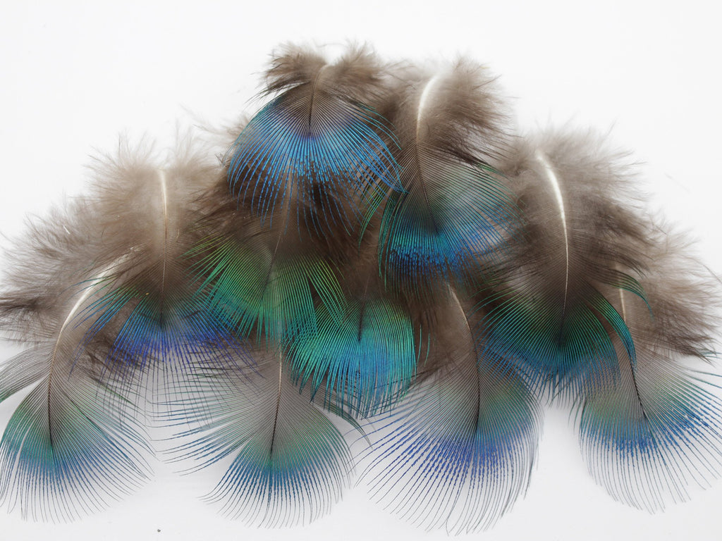 Blue Peacock Plumage Feathers