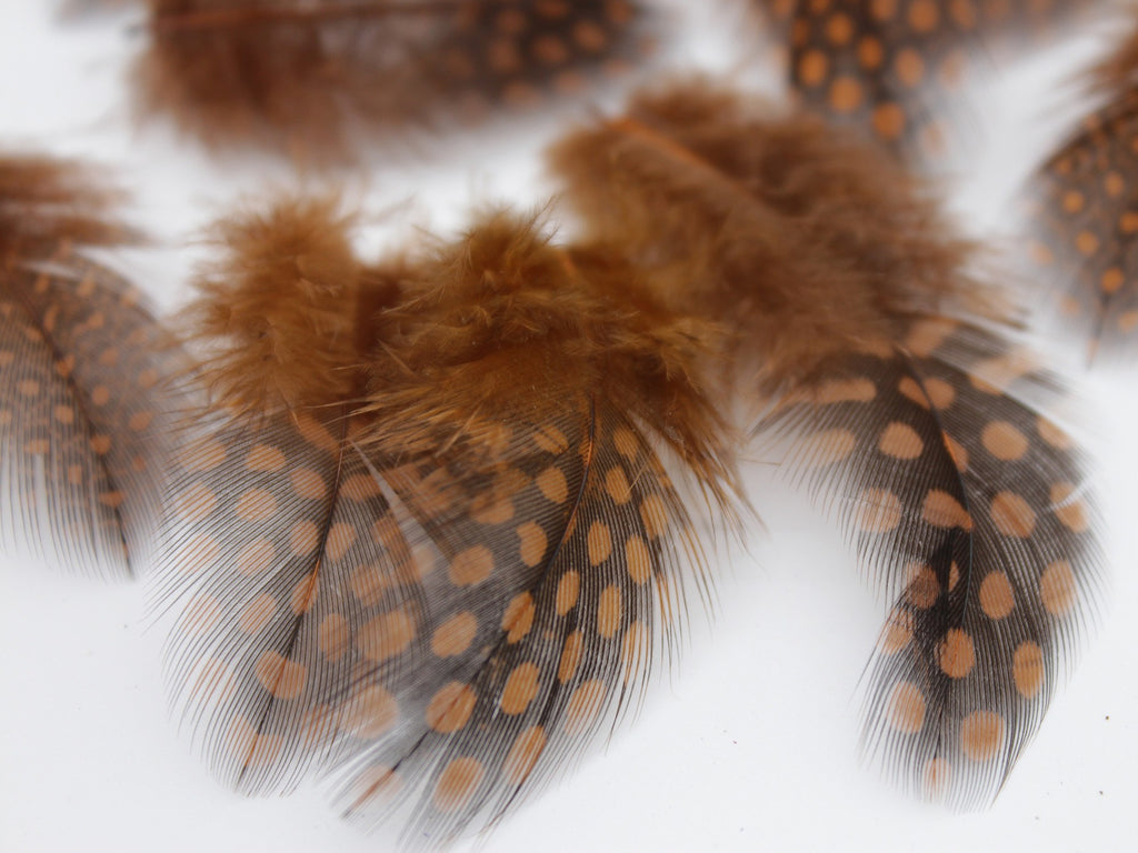 Brown Guinea Fowl Plumage Feathers