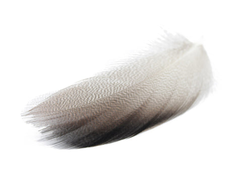 Mallard Duck Plumage Feathers