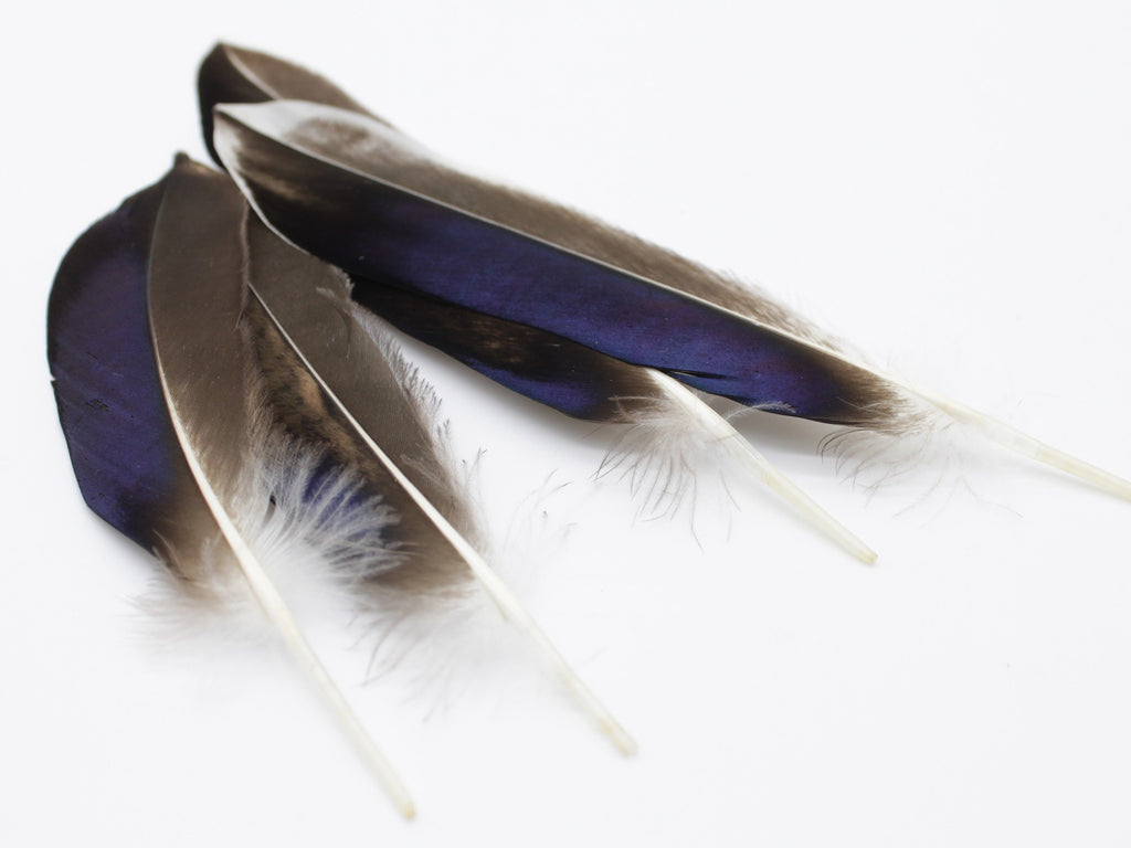 Mallard Duck Quill Feathers (Natural)