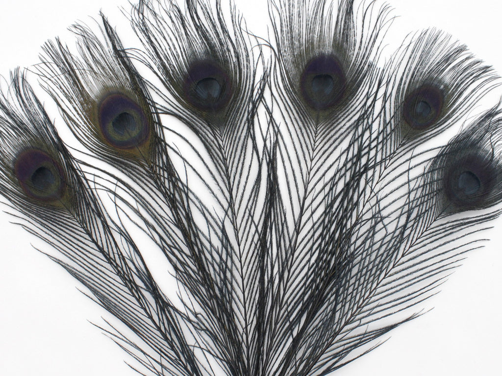 "Dyed Black Peacock Feather Tails with Eyes (10-12"")"