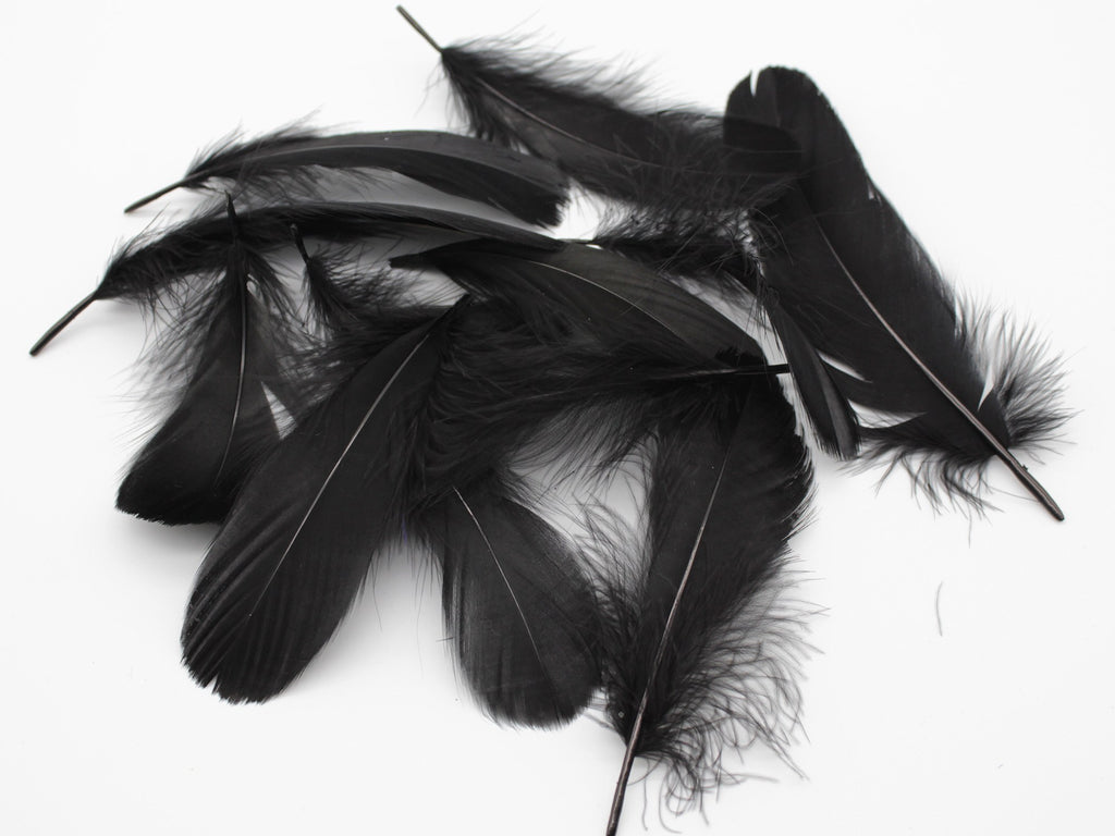 "Black Goose Coquille Feathers (3-5"")"