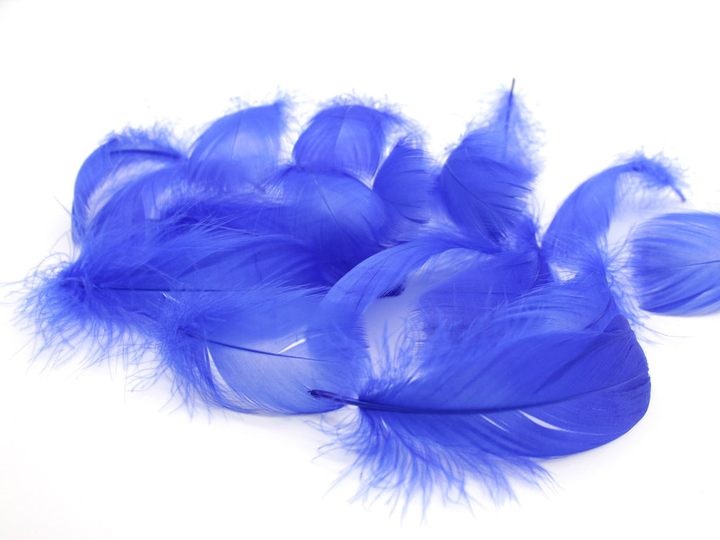 "Royal Blue Goose Coquille Feathers (2-3"")"