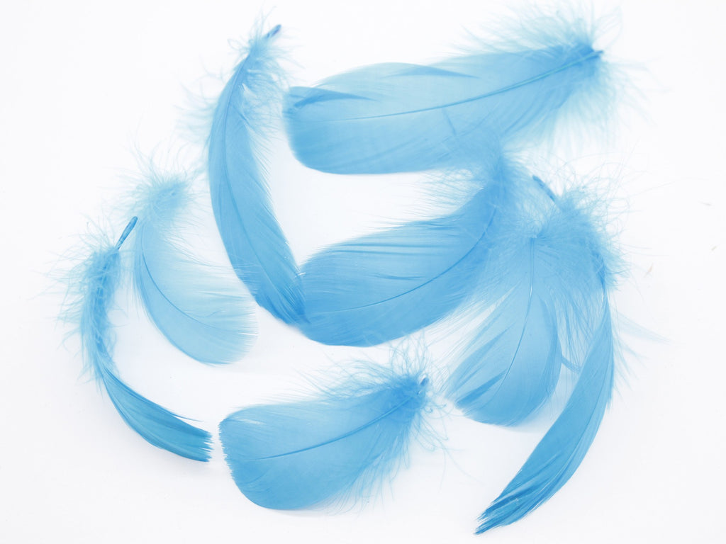 "Lake Blue Goose Coquille Feathers (3-5"")"