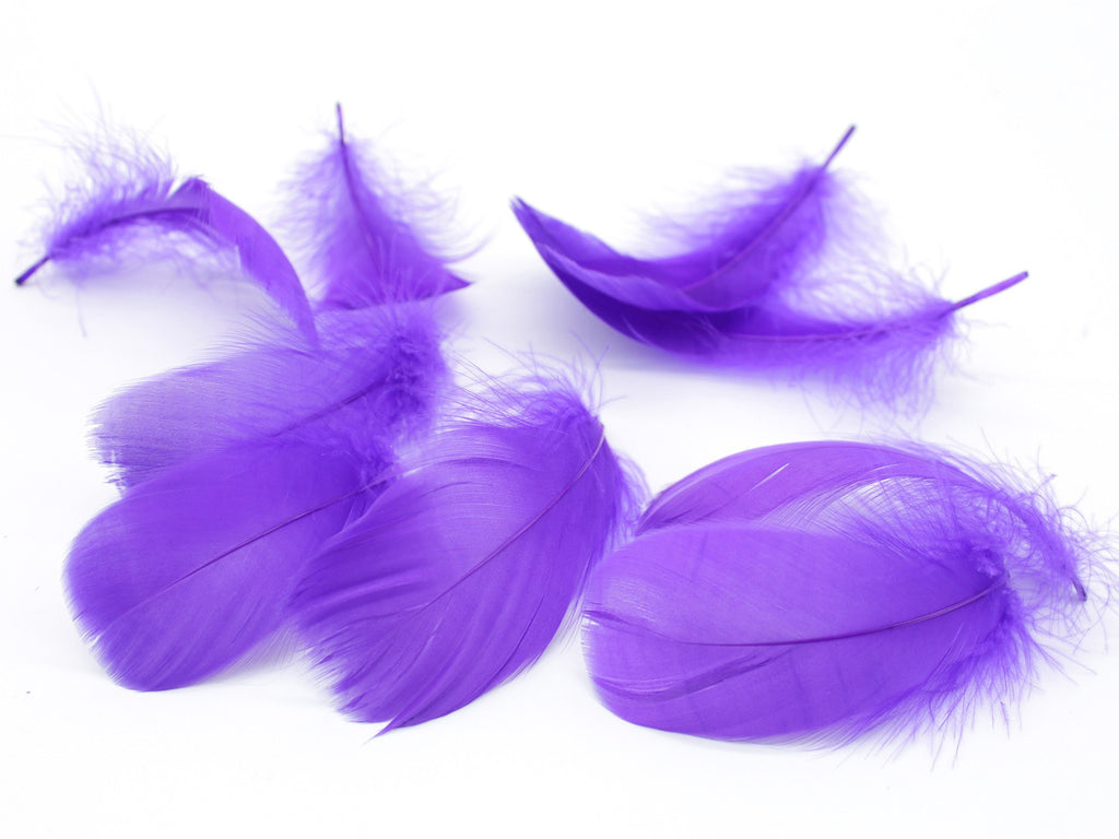 "Purple Goose Coquille Feathers (2-5"")"