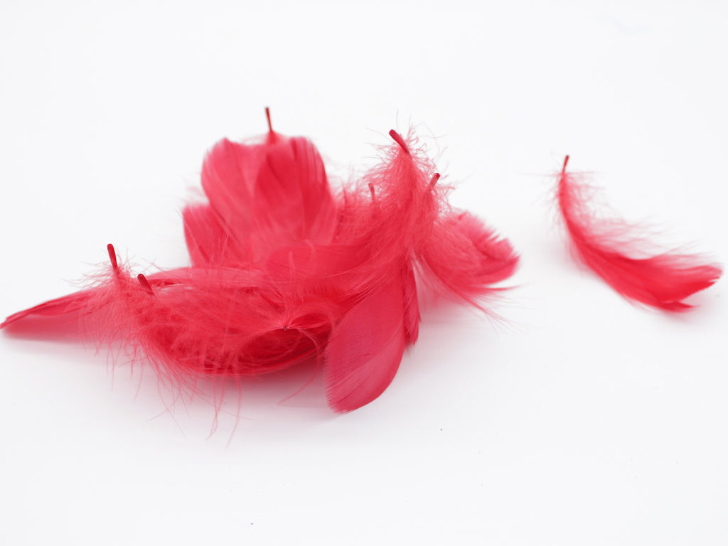 "Red Goose Coquille Feathers (3-5"")"