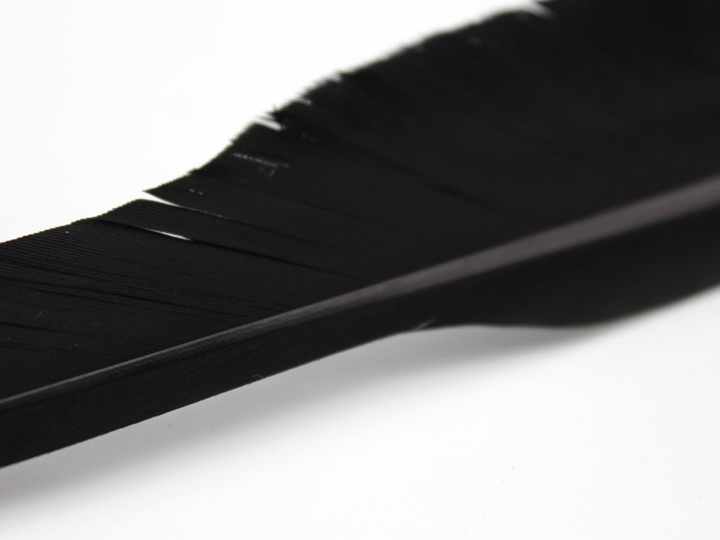 Black Goose Wing Pointer Feather Quill