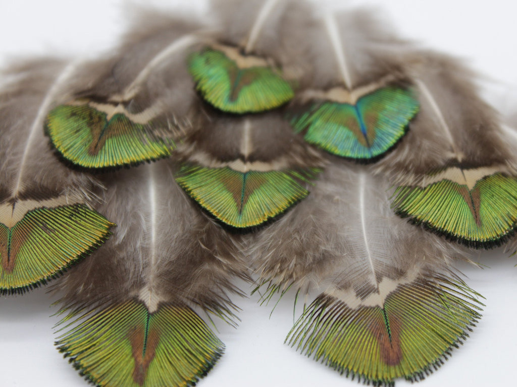 Gold Peacock Plumage Feathers