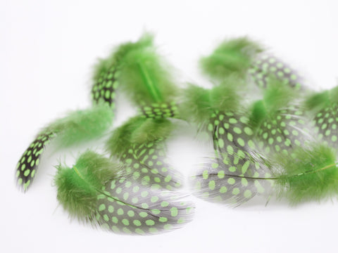 Green Guinea Fowl Plumage Feathers