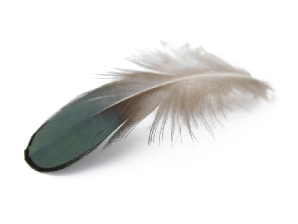 Lady Amherst Pheasant Green Plumage Feathers