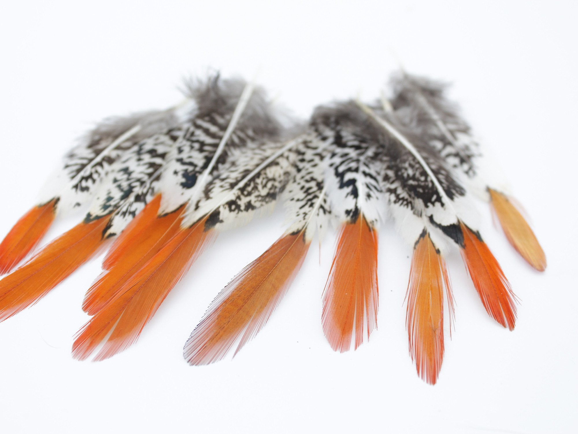 How to clean pheasant feathers - Lady Amherst Pheasant Orange Tipped Feathers