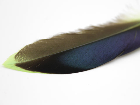Mallard Duck Quill Feathers (Green)
