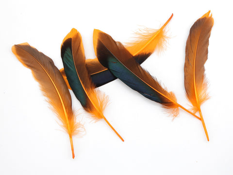 Mallard Duck Quill Feathers (Orange)