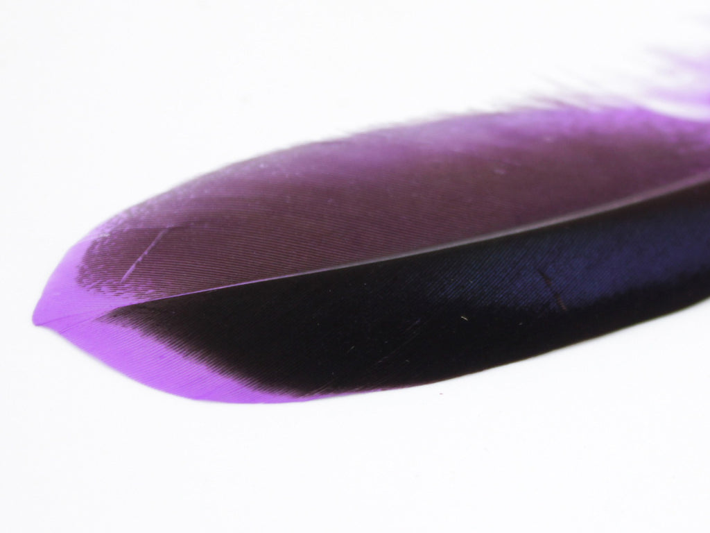 Mallard Duck Quill Feathers (Purple)