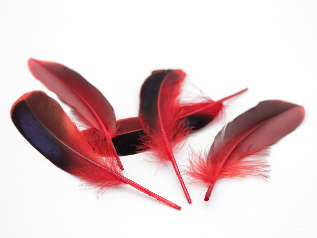 Mallard Duck Quill Feathers (Red)