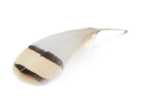 Partridge Plumage Feathers