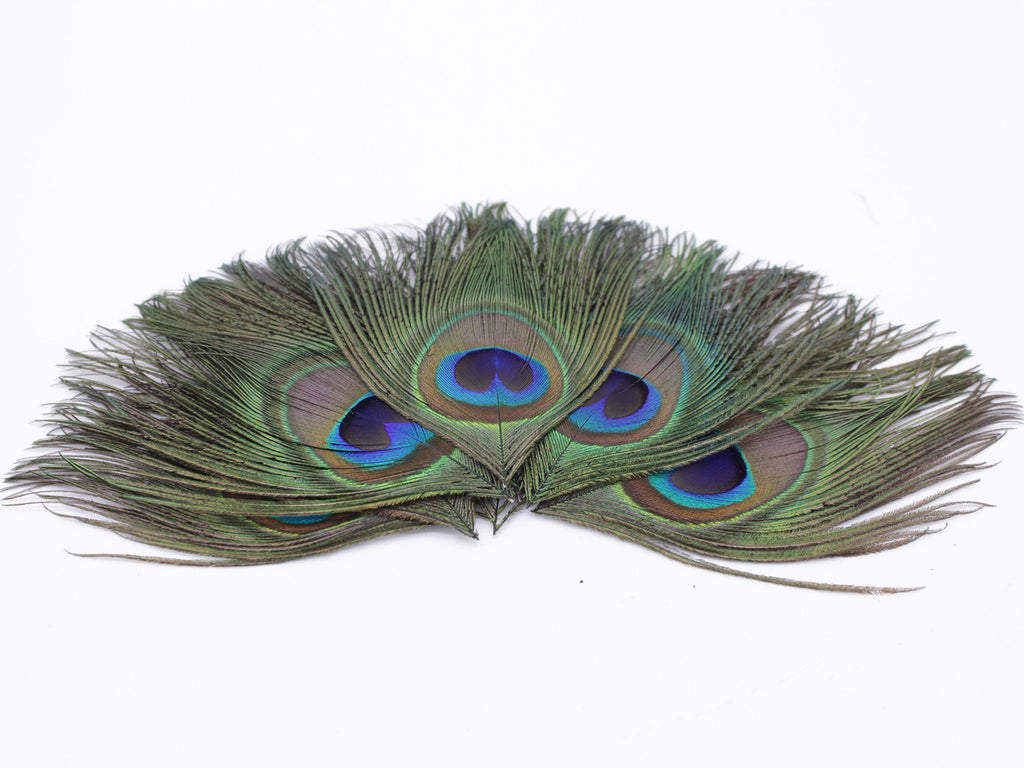 Peacock Feather Eyes (Small)