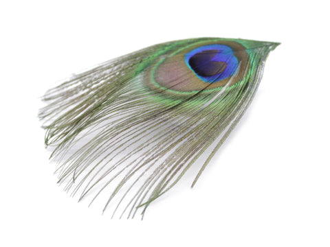 Peacock Feather Eyes (Large)