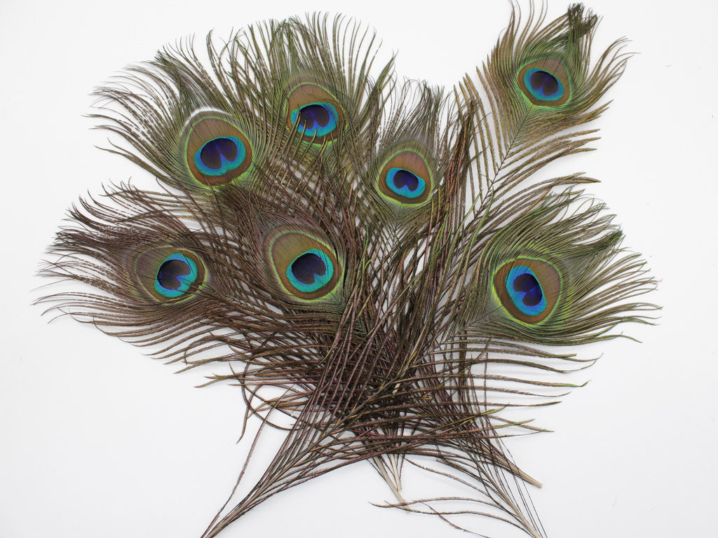 "Peacock Feather Tails with Eyes (10-12"")"